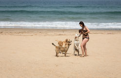 Attractive woman on seashore. Woman playing with dogs on the beach Stock Images