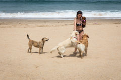 Attractive woman on seashore. Woman playing with dogs on the beach Stock Photos