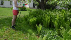 Attractive woman watering ferns with hand sprayer sprinkler tool. Attractive young woman in shorts watering fern plants with hand sprayer sprinkler tool under stock footage