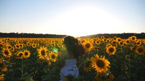 Attractive woman in white dress running through field with sunflowers at sunset. Follow to young carefree girl enjoying