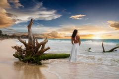 Attractive woman stands next to a driftwood tree on a caribbean beach. Attractive woman in a white dress stands next to a driftwood tree on a caribbean beach Stock Images