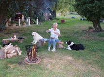 The dogs are sitting around the campfire with the young blond woman and watching her eating fried eggs stock images