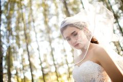 Attractive young bride wear wedding dress and white veil, stand alone in the field grass with rim light from the sun. Bride in the Meadow concept. image for Stock Photos
