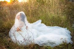 Attractive young bride wear wedding dress and white veil, stand alone in the field grass with rim light from the sun. Bride in the Meadow concept. image for Stock Photo