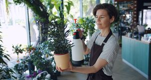 Attractive young brunette in apron spraying green plant in pot using sprinkler. In bottle working alone in modern flower shop. Youth and profession concept stock video footage