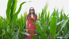 Attractive young girl in red dress with long brown hair standing against the background of corn field and looking into. Camera. Beautiful woman in sunglasses in stock video footage