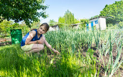Attractive young girl in a vegetable garden Royalty Free Stock Image