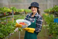 Portrait of Attractive Greenhouse Worker Stock Photo