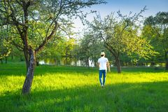 Attractive young man in natural parkland in summer morning royalty free stock images