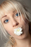 Attractive young woman with big blue eyes and a chrysanthemum in her mouth Royalty Free Stock Photos