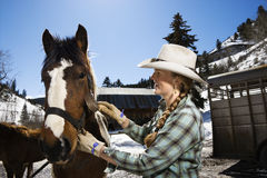 Attractive Young Woman Grooming Horse Royalty Free Stock Photo