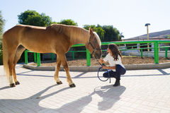 Attractive young woman grooming a horse at the stock image