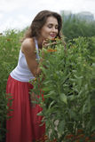 Attractive young woman in nature. Attractive brunette woman in nature Stock Photo