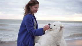 Attractive young woman plays with two dogs of the Samoyed breed by the sea. White fluffy pets on the beach having fun. Beautiful sky on the background stock video footage