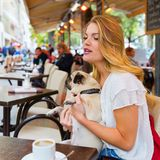 Young woman with a pug in a street cafe. Attractive young woman sits with a cute pug in the arms in a street cafe Stock Photography