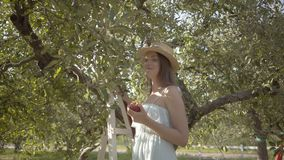 Pretty young woman in straw hat and long white dress looking at the camera holding apple standing on a ladder in the. Attractive young woman in straw hat and stock video footage