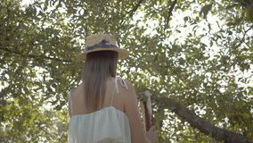 Attractive young woman in straw hat and long white dress picking apples standing on a ladder in the green garden. Attractive young woman in a straw hat and long stock footage