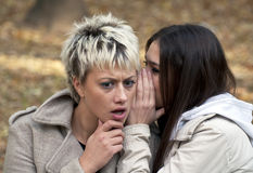 Attractive young women whispering secrets in park. Attractive young women whispering secrets in city park Stock Photography