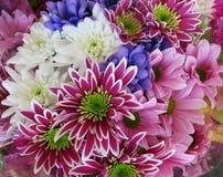 AttractiveColourful brilhante bonito Daisy Flowers Bouquet imagens de stock royalty free