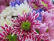 AttractiveColourful brilhante bonito Daisy Flowers Bouquet fotos de stock