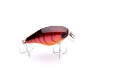 Attrait pour les poissons prédateurs contagieux Photographie stock