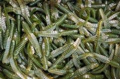 Attraits verts en plastique de Fishint Images stock
