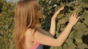 Attraktiv flicka som söker efter druvor i vingården arkivfilmer