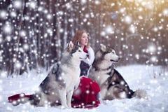 Attraktiv kvinna med hundkapplöpningen Huskies eller Malamute Jul royaltyfri fotografi