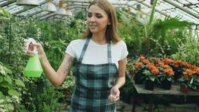 Attraktiv kvinnaträdgårdsmästare i förkläde som bevattnar växter och blommor med den trädgårds- sprejaren i växthus fotografering för bildbyråer