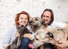 Attraktiv man och hans unga fru med husdjur, två hundkapplöpning och en katt, royaltyfria foton