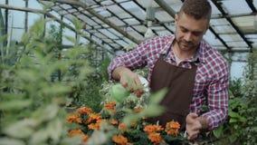 Attraktiv manträdgårdsmästare i förkläde som bevattnar växter och blommor med den trädgårds- sprejaren i växthus lager videofilmer