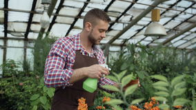 Attraktiv manträdgårdsmästare i förkläde som bevattnar växter och blommor med den trädgårds- sprejaren i växthus arkivfilmer