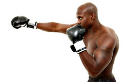 Attraktiv svart Male boxare över White Arkivfoton