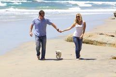 Attraktiva par med deras labradorvalp som går på stranden Fotografering för Bildbyråer