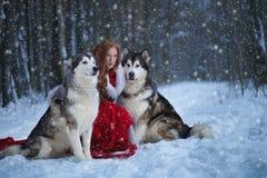 Attraktive Frau mit den Hunden Lizenzfreie Stockfotos