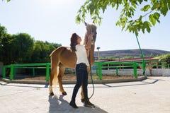 Attraktive junge Frau, die ein Pferd an pflegt Stockfotos