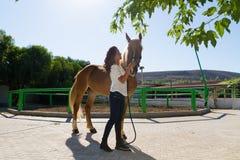 Attraktive junge Frau, die ein Pferd an pflegt Stockbilder