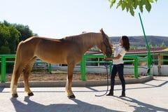 Attraktive junge Frau, die ein Pferd an pflegt Lizenzfreies Stockfoto