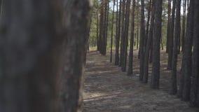 Attraktive junge Frau im schönen langen schwarzen und roten Kleid langsam gehend unter die Bäume im Kiefernwald stock footage