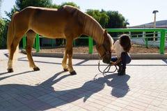 Attraktive junge Frau mitfühlend ein Pferd an Stockfoto