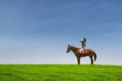 Attraktives Jockeyreitpferd am Feld Stockfotos