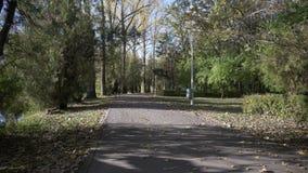 Attraktives vorbildliches Mädchentraining im Park früh morgens für Marathon - stock video footage