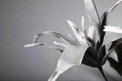 Attraktivt blomma solo i Gray Scale Fotografering för Bildbyråer
