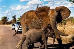 Attraversamento degli elefanti Fotografia Stock