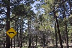 Attraverso avvertimento nazionale di Yosemite Park_Panther Fotografia Stock Libera da Diritti