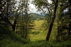 Attraverso gli alberi Fotografia Stock