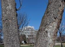 Attraverso gli alberi--Edificio per uffici esecutivo di Eisenhower Fotografia Stock Libera da Diritti