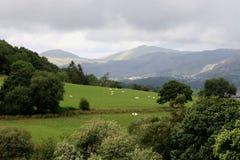 Attraverso i campi a Snowdonia Immagine Stock