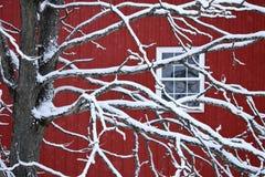 Attraverso i rami di Snowy Immagini Stock Libere da Diritti