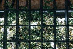 Attraverso il giardino della pergola coperto di fogliame e di backli verdi fotografia stock libera da diritti